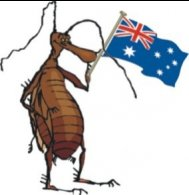 pre purchase timber pest inspections, termite control, Rodent Management Services